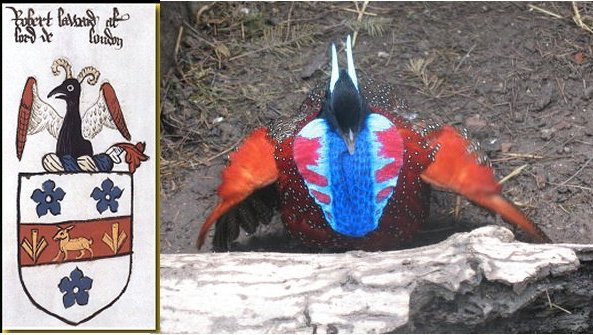 tragopan_and_arms_slide.jpg